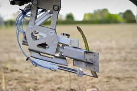 robotic asparagus harvester