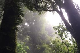 New Zealand forest atmosphere