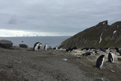 University of Waikato collaborates on global project to secure Antarctica's future