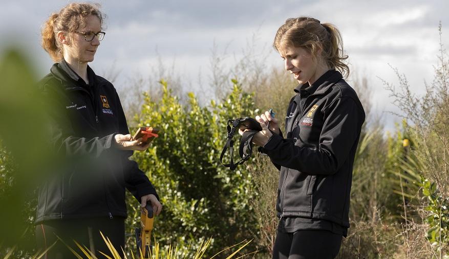 Bruce Clarkson Ecology Restoration